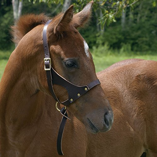 - Perri's Grow with Me Leather Foal Halter, Havana, One Size