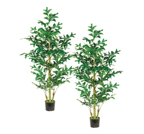 Two 6' Fishtail Palm Tree W/370 Lvs. In Pot Green