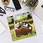 2020 Siberian Husky Puppies Wall Calendar by Bright Day, 16 Month 12 x 12 Inch, Cute Dogs Puppy Animals Chukcha Canine 10