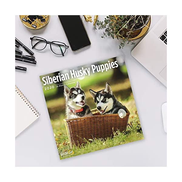 2020 Siberian Husky Puppies Wall Calendar by Bright Day, 16 Month 12 x 12 Inch, Cute Dogs Puppy Animals Chukcha Canine 5