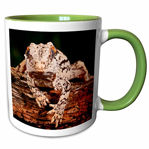 3dRose Danita Delimont - Lizards - Gargoyle Gecko lizard Native to New Caledonia - NA02 DNO0923 - David Northcott - 15oz Two-Tone Green Mug (mug_140206_12)