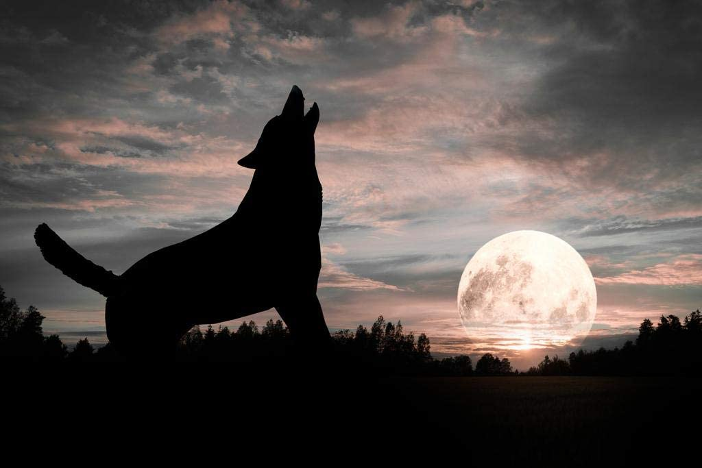 Lone Wolf Silhouette Howling At Moon Dramatic Wolf Posters For Walls Posters Wolves Print Posters Art Wolf Wall Decor Nature Posters Wolf Decorations for Bedroom Cool Wall Decor Art Print Poster 36x24