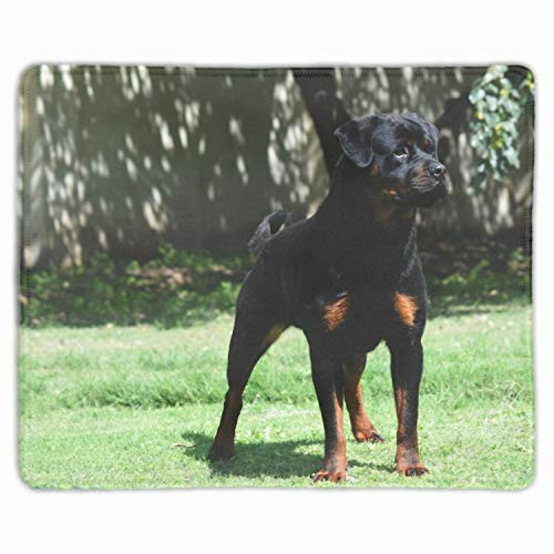 Animal Rottweiler Dogs Customized Non-Slip Rubber Mousepad Gaming Mouse Pad - 11.8-inch by 9.85-inch