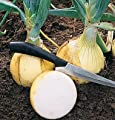David's Garden Seeds Onion Ailsa Craig Exhibition D2485RZ (White) 200 Open Pollinated Seeds