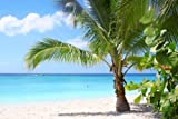 "Palm Tree on Tropical Island Beach - 48""W x 32""H - Peel and Stick Wall Decal by Wallmonkeys"