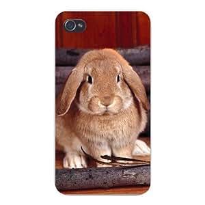 Apple Iphone Custom Case 4 4s Plastic Snap on - Cute Bunny Rabbit Hare Sitting Closeup