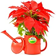 Regador FG Import Top Garden Vermelho