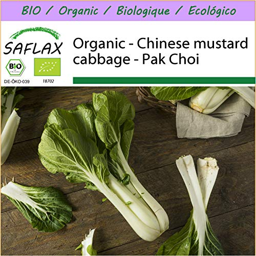 SAFLAX - Organic - Chinese Mustard Cabbage - Pak Choi - 300 Seeds - Brassica rapa