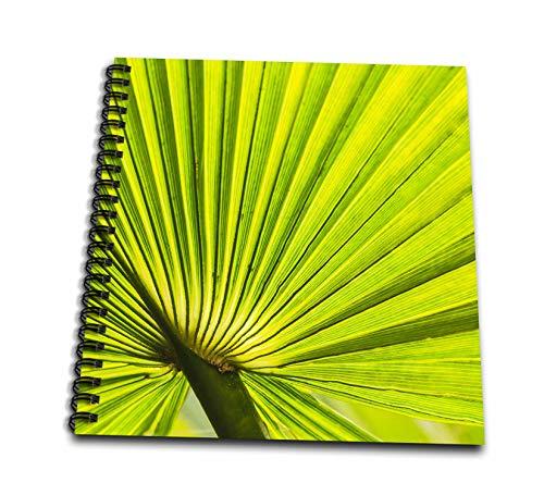 3dRose Danita Delimont - Natural Patterns - Palm fan, Southern California, USA - Memory Book 12 x 12 inch (db_314717_2) ()
