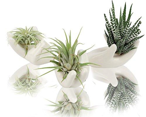 NeutralPure ECO Table Top Flower Pot Tillandsia Air Plant Holder; Multipurpose Ceramic Porcelain Artware Decorator (3 Pcs) by NeutralPure ECO
