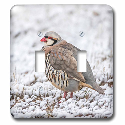 Antelope Stand - 3dRose Danita Delimont - Birds - Utah, Antelope Island State Park, Chukar stands in the snow. - Light Switch Covers - double toggle switch (lsp_260205_2)