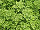 David's Garden Seeds Spinach New Zealand EB686 (Green) 100 Heirloom Seeds