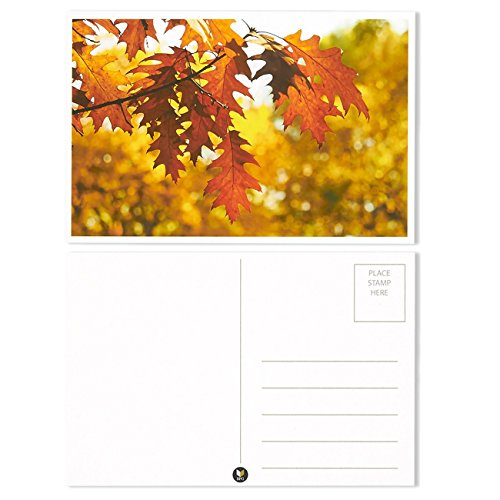Set of 40 Four Seasons Postcards Print Variety Pack Fall Autumn Winter Summer Spring Theme Self Mailer Mailing Side Postcards 20 Different Picture Designs 40 Pack Postage Saver - 4 x 6 Inches Photo #3