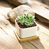 SUN-E Modern White Ceramic Succulent Planter Pots / Mini Flower Plant Containers with Bamboo Saucers (Square)