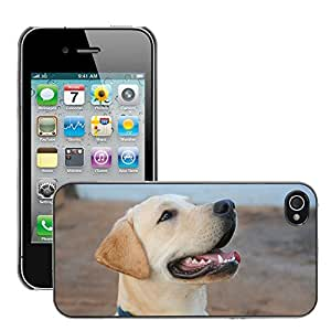 Super Stella Slim PC Hard Case Cover Skin Armor Shell Protection // M00147255 Dog Labrador Canine Animals Pet // Apple iPhone 4 4S 4G