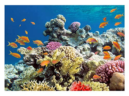 Real Blue Undersea World Photography Backdrop 7x5ft Colorful Seabed Coral Fish of High Definition Children Photo Studio Background - Memory Definition High