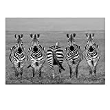 Sea Charm - Animal Canvas Wall Art,Black and White Zebra Canvas Painting,Wild Animal Picture Giclee Print on Canvas,Framed and Ready to Hang,Modern Home Ofiice Wall Decor