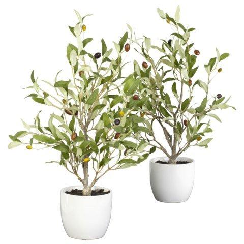 18 Inch Olive Silk Tree w/Vase (Set of 2)