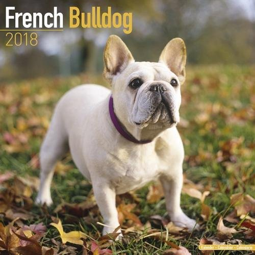 Price comparison product image French Bulldog Calendar - Dog Breed Calendars - 2017 - 2018 wall Calendars - 16 Month by Avonside