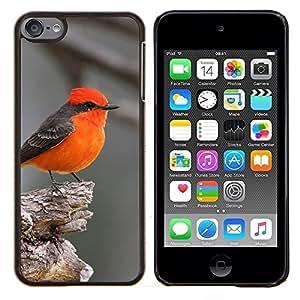 Red Bird Songbird gris lindo Pequeño Tiny- Metal de aluminio y de plástico duro Caja del teléfono - Negro - iPod Touch 6