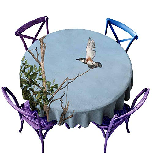 Acelik Custom Tablecloth,Belted Kingfisher Takes Off,Stain Resistant, Washable,50 INCH ()