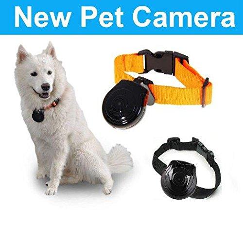 Pet Monitor Dog And Puppy Camera