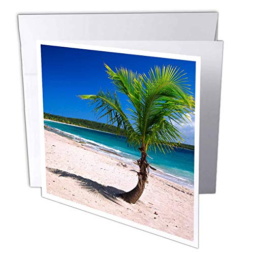 3dRose Danita Delimont - Tropical - Caribbean, Puerto Rico, Vieques. Lone Coconut Palm on Red Beach. - 12 Greeting Cards with envelopes (gc_312993_2)
