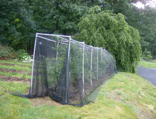 GREEN VISTA'S DELUXE BIRD BARRIER NET / NETTING - 12x30 Feet - Protects Fruit Trees, Berry Shrubs, Vegetables, Flowers and More - 1/4x3/8 Inch Mesh by Green Vista Water Gardens (Image #2)