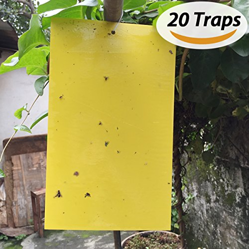 BESKIT 20-Pack Dual-sided Yellow Sticky Traps for Fungus Gnat, Whitefly, Aphid, Leaf Miner, Other Flying Insects, Bugs (10x6 Inches, 20Pcs Twist Ties (10 Traps)