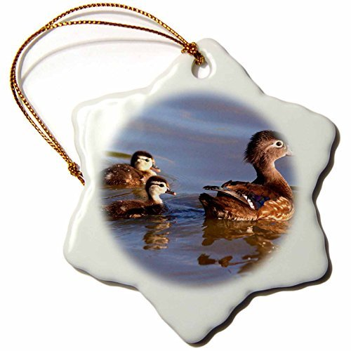 Christmas Ornament Danita Delimont - Ducks - USA, California, San Diego, Lakeside. Mother and Wood Ducklings. - Snowflake Porcelain Ornament]()