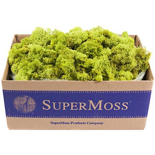 Super Moss Sea Glass Vase Fillercharteuse2 Pounds