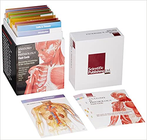 Anatomy Physiology Flash Cards 9781932922974 Medicine Health