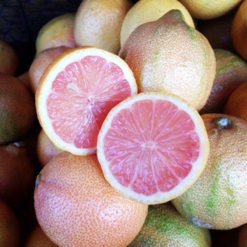 Rare seedsVariegated Pink Fleshed Eureka Lemon » 5 fresh seeds ()