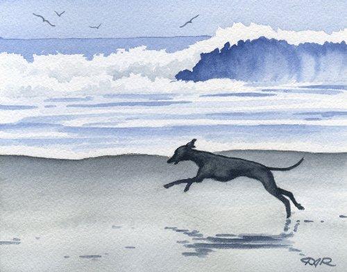 Italian Greyhound at The Beach Art Print by Artist DJ Rogers