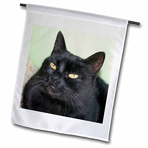 3dRose fl_128378_1 Black Cat Portrait a Black Cat Posing Against a Green Wall with Striking Yellow Eyes Garden Flag, 12 by 18-Inch