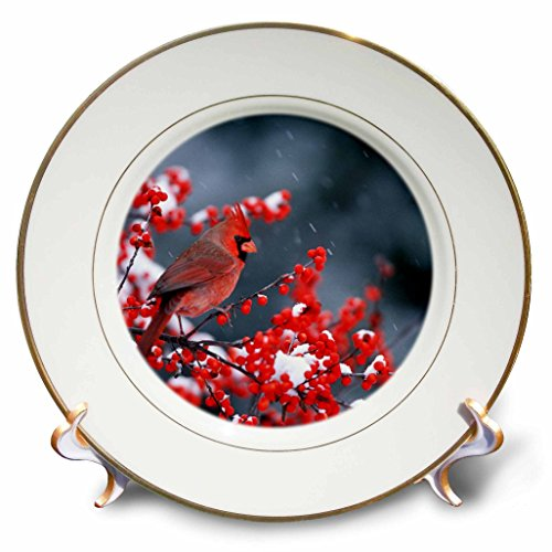 3dRose Northern Cardinal Male in Common Winterberry in Winter Plate, 8