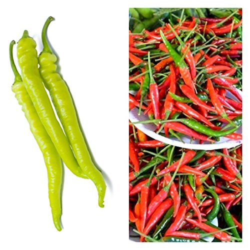 Philippine Vegetables Hot Peppers: Siling Labuyo and Green Finger Pepper pang sinigang na sili. 2 packets, 20 seeds each. (Bureau Of Plant Industry Seeds For Sale)