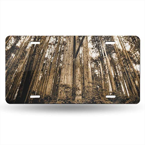 (TPSXXY-LP Pine Sepia Texture Trees Novelty Car 6x12 Aluminum Front Vehicle License Plate Frame Vanity Tag Sign)