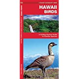 Hawaii Birds: A Folding Pocket Guide to Familiar Species (A Pocket Naturalist Guide)