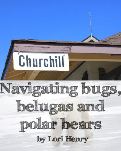 Navigating bugs, belugas and polar bears in Churchill, Canada (Beluga Short)