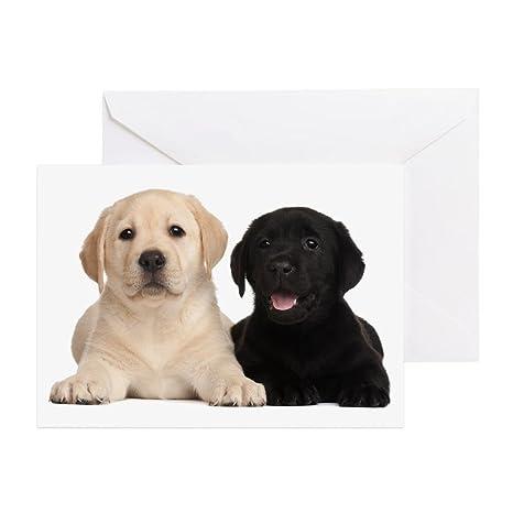 Amazon Cafepress Labrador Puppies Greeting Card 20 Pack