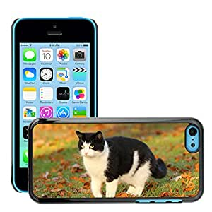Super Stella Slim PC Hard Case Cover Skin Armor Shell Protection // M00145661 Cat Animal Cute Pet Kitten White // Apple iPhone 5C