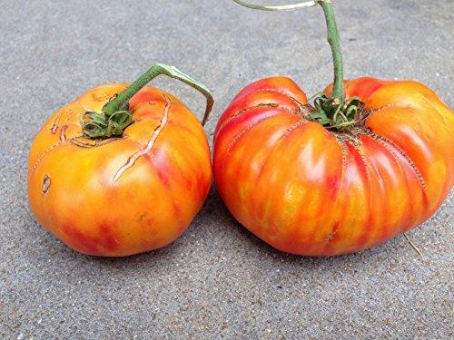 Pineapple Tomato Seeds ► Organic Heirloom Bicolor Pineapple Tomato Seeds (30+ seeds) ◄ by PowerGrow -