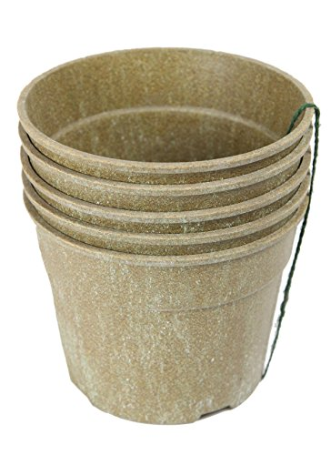 - Barn Eleven Biodegradable Starter Pots for Seedlings Cuttings and Plants, 6
