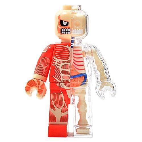 4D Vision Body Anatomy   Muscel Man Funny Anatomy By Jason Freeny