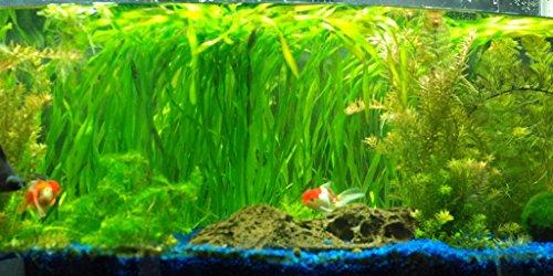 Aquarium Plants Discounts Живые животные Jungle