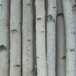 Four Medium White Birch Poles 8 ft