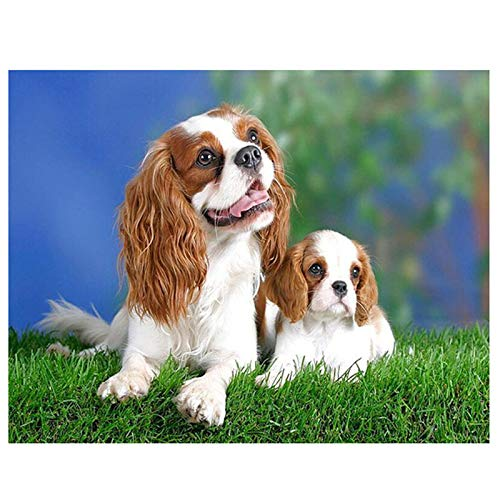 (Zimal Full Round Diamond Embroidery Cavalier King Charles Spaniel 5D DIY Diamond Painting Dog Picture Cross Stitch New Year 11.8 x 15.8 Inch)