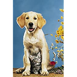 (24x36) Mr Big & Mrs Little (Dog & Cat) Art Poster Print