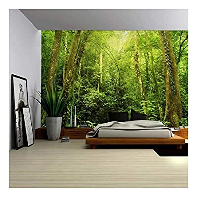 Entrance to a Dark Leafy Forest - Wall Mural, Removable Sticker, Home Decor - 100x144 inches